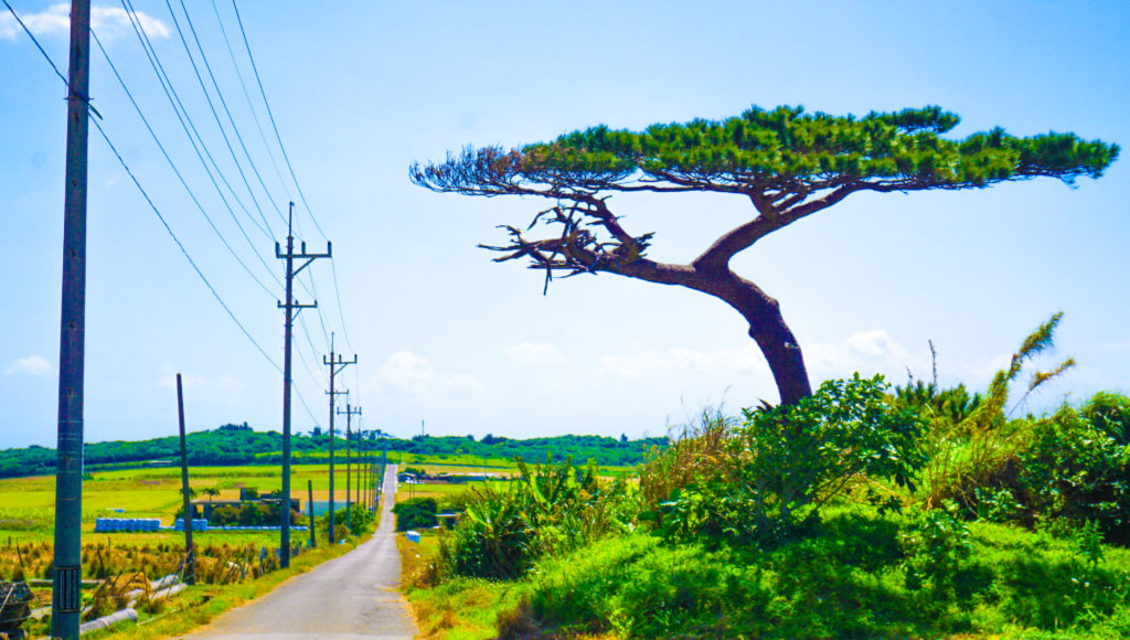 小浜島のシュガーロード
